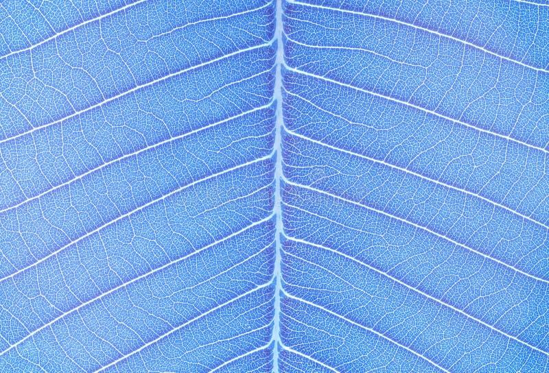 Тон искусства крупного плана поверхностный абстрактной картины на голубых свежих лист текстурировал предпосылку в тоне искусства стоковое изображение