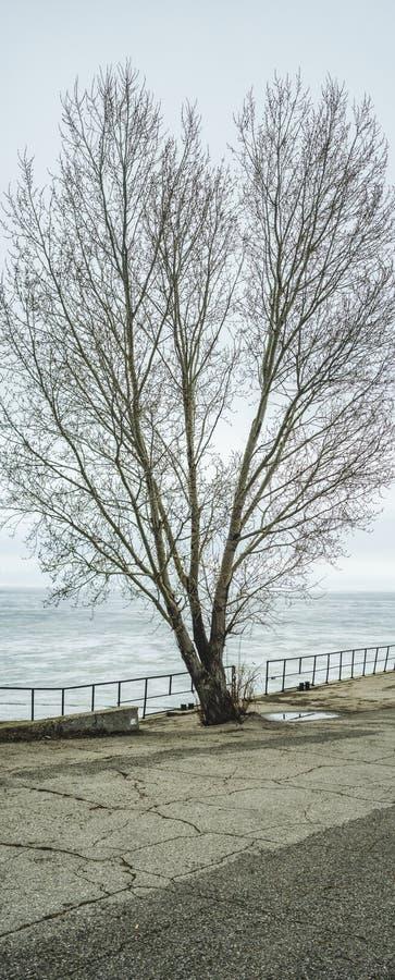 Тополь на пристани, Togliatti стоит вне против белых снежных неба и гор зимы Ландшафт зимы стоковые фотографии rf