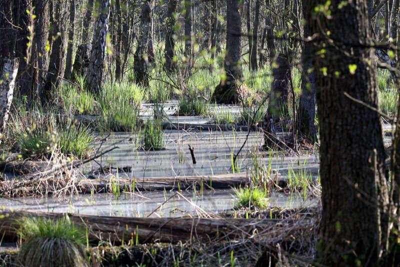 топь национального парка kampinos стоковое изображение