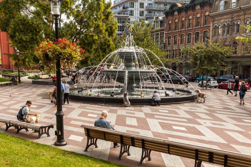 Торонто, КАНАДА - 10-ое октября 2018: Руки в парке Berczy, небольшом стоковые фотографии rf