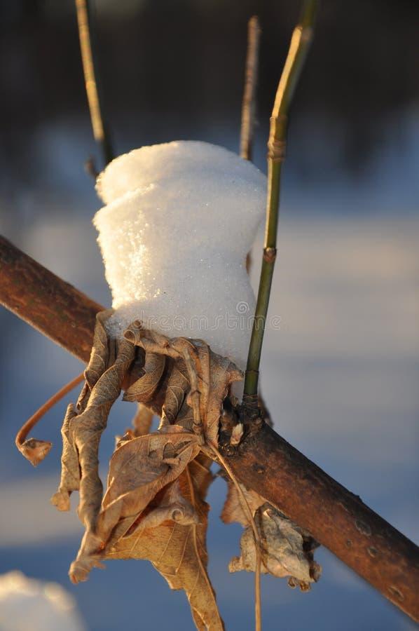 Торты сделанные снега. стоковые фотографии rf