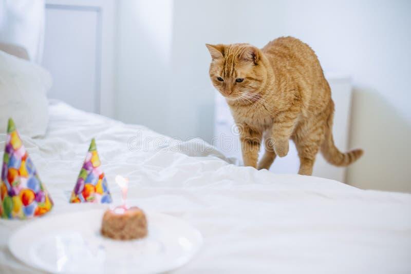 Торт корма для домашних животных для дня рождения кота стоковое изображение