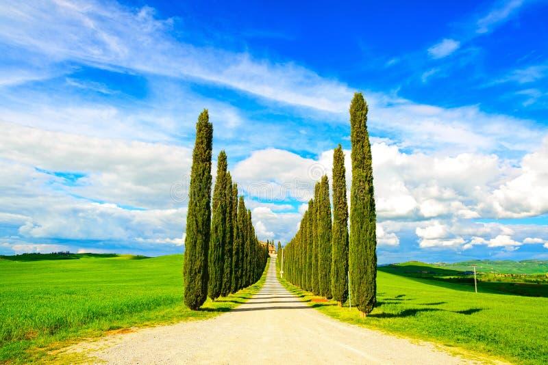 Тоскана, ландшафт белой дороги деревьев Cypress сельский, Италия, Европа стоковые изображения