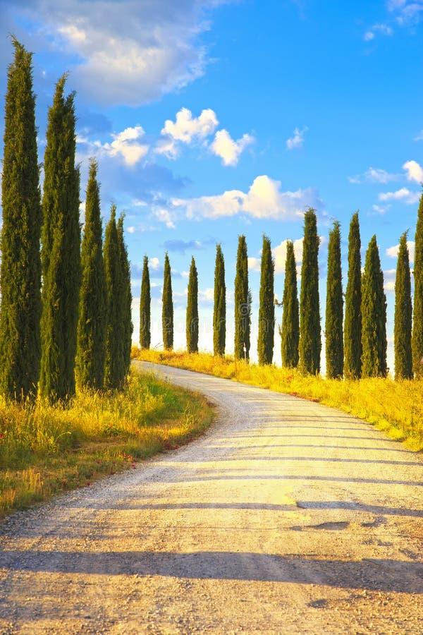 Тоскана, ландшафт белой дороги деревьев Cypress сельский, Италия, Европа стоковая фотография rf