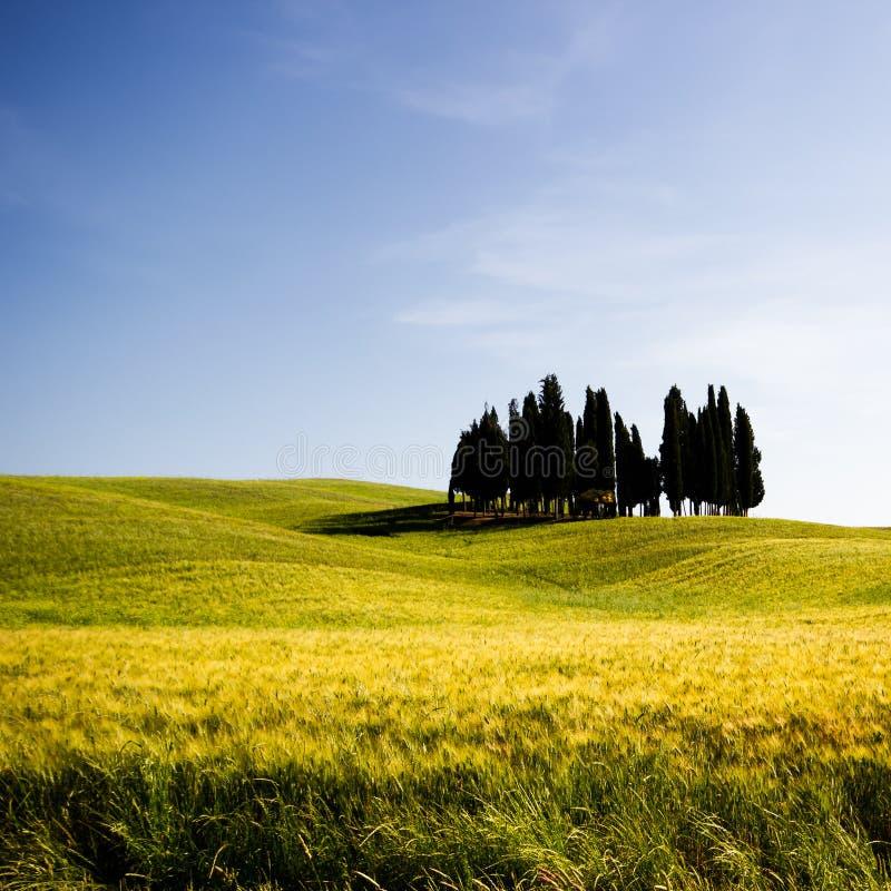 Тоскана, ландшафт весны стоковое фото