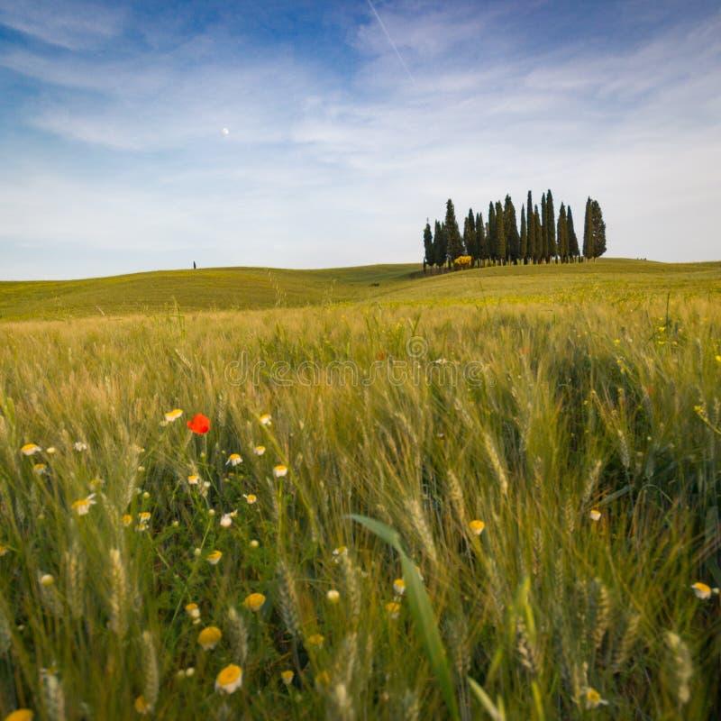 Тоскана, ландшафт весны стоковые изображения