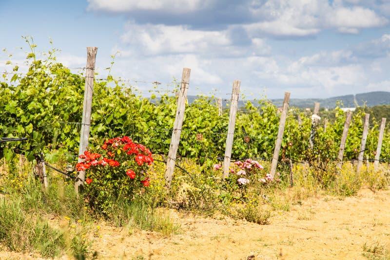 Тоскана Wineyard стоковое фото