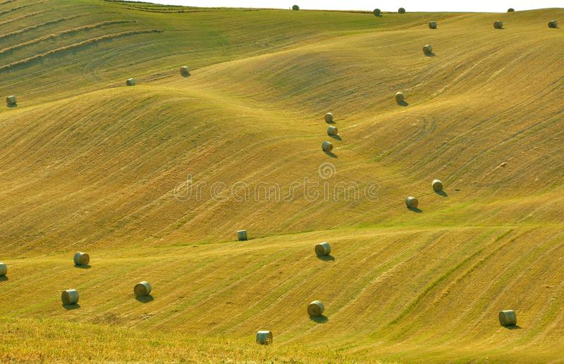 Тосканские поля, Италия стоковые фотографии rf