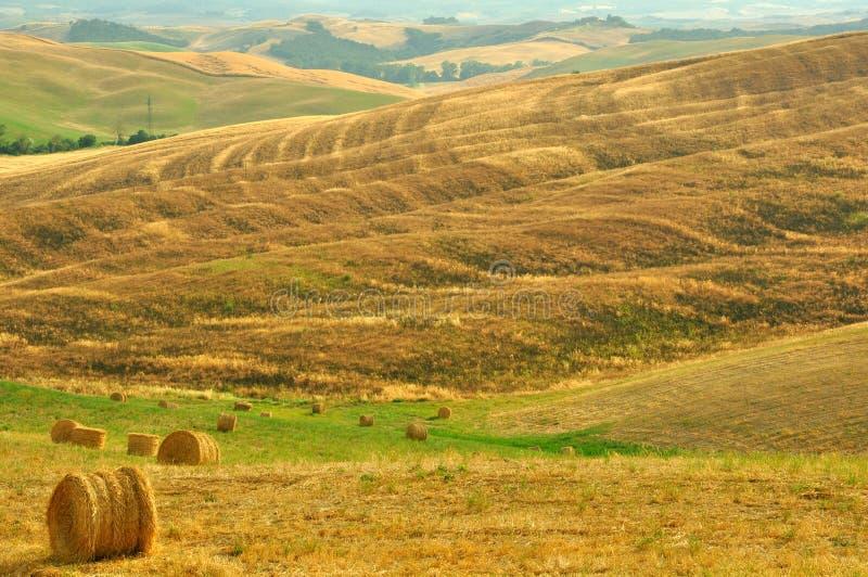 Тосканские поля, Италия стоковое фото rf