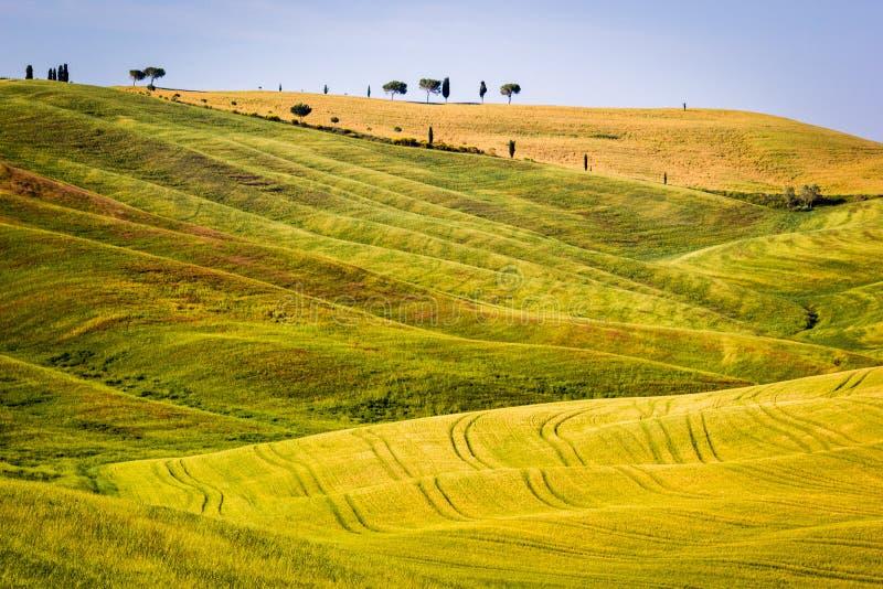 Тосканский ландшафт, Rolling Hills стоковые изображения rf