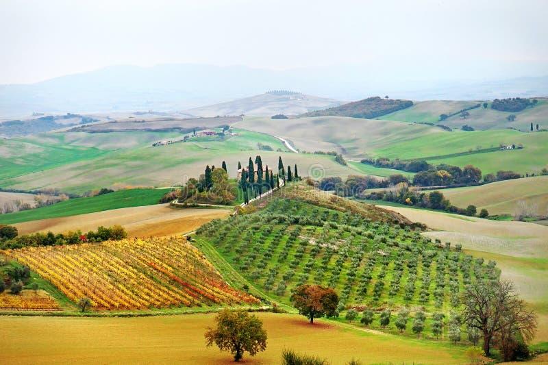 Тосканский ландшафт сельской местности с виноградниками, кипарисами и взглядом Rolling Hills панорамным в осени, Тоскане, Италии стоковая фотография rf