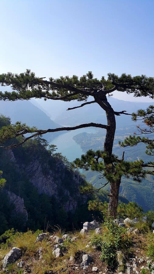 Точка зрения горы Тары стоковое изображение