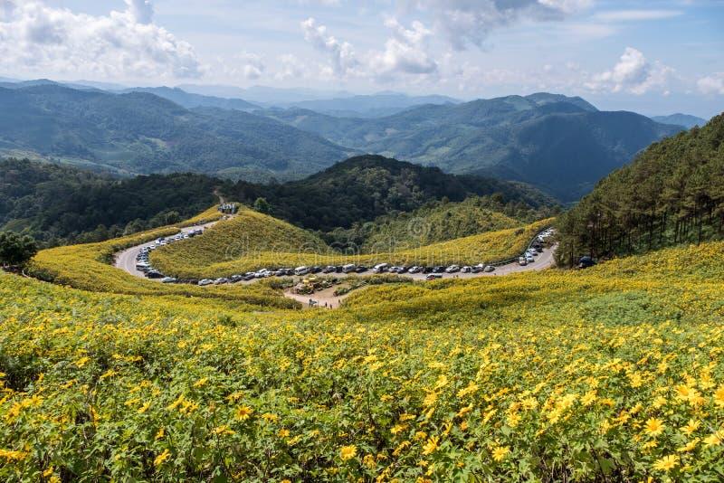 Точка зрения поля мексиканского солнцецвета стоковое изображение