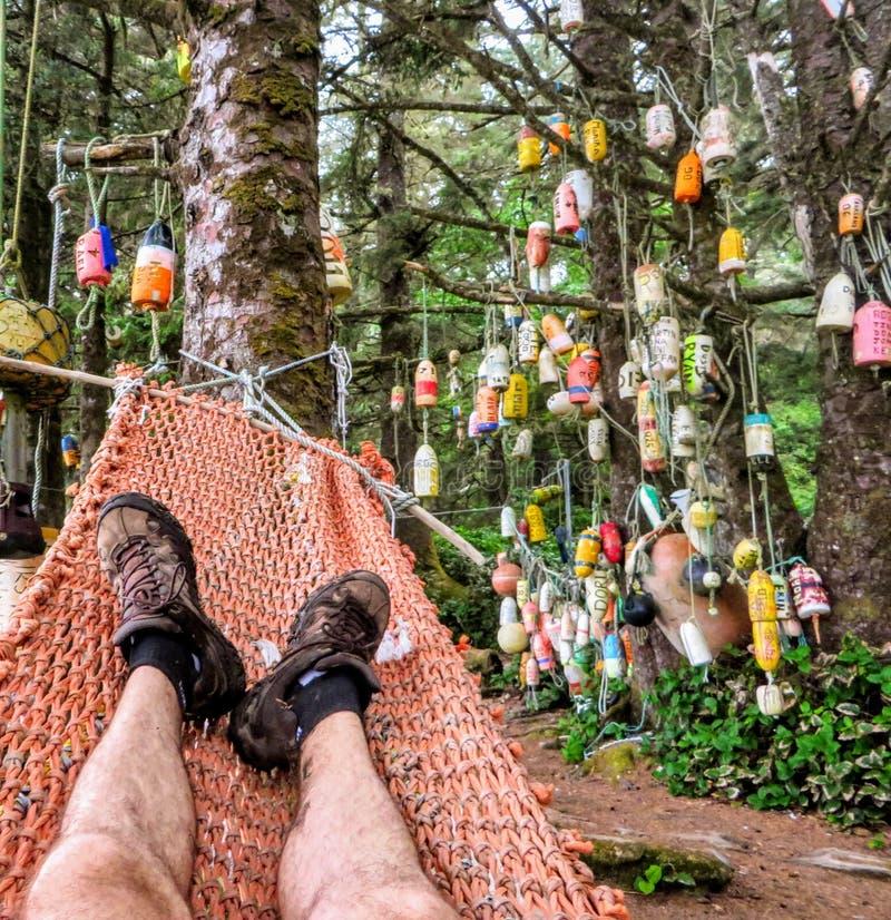 Точка зрения hiker отдыхая в гамаке на кемпинге с томбуями вися в деревьях на следе западного побережья, b C стоковые изображения