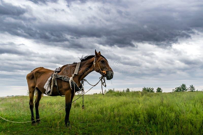 Тощая лошадь в зеленой траве стоковые изображения rf