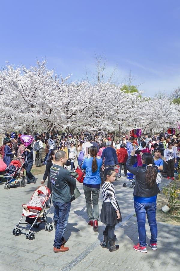 полное описание пекин весной март фотографии институт