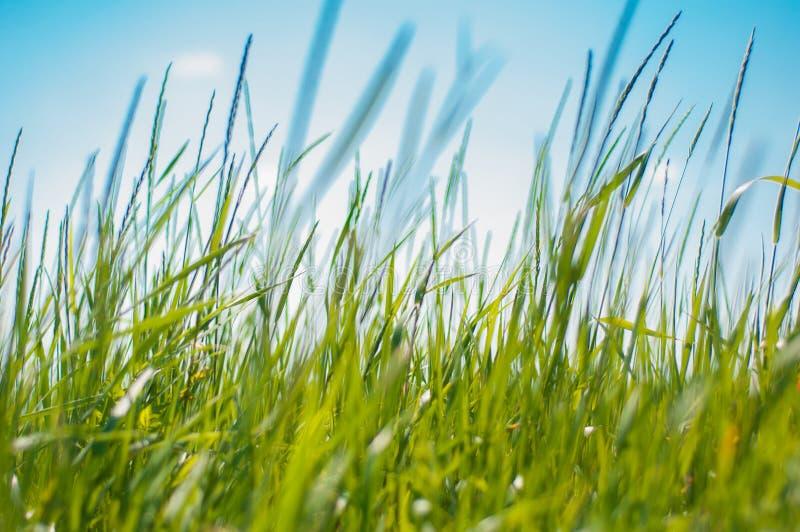Толстая зеленая богатая трава в поле утра стоковое фото