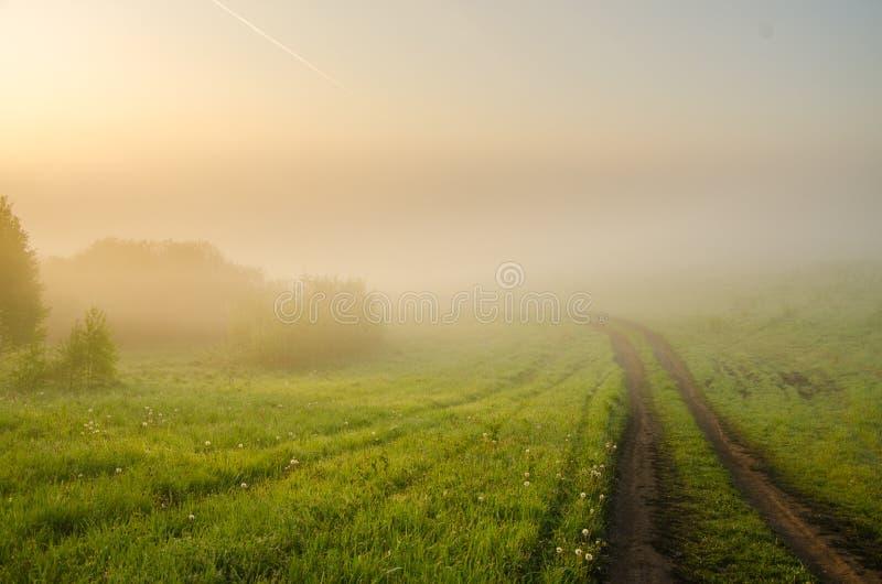 толстый туман утра в лесе лета стоковые фотографии rf