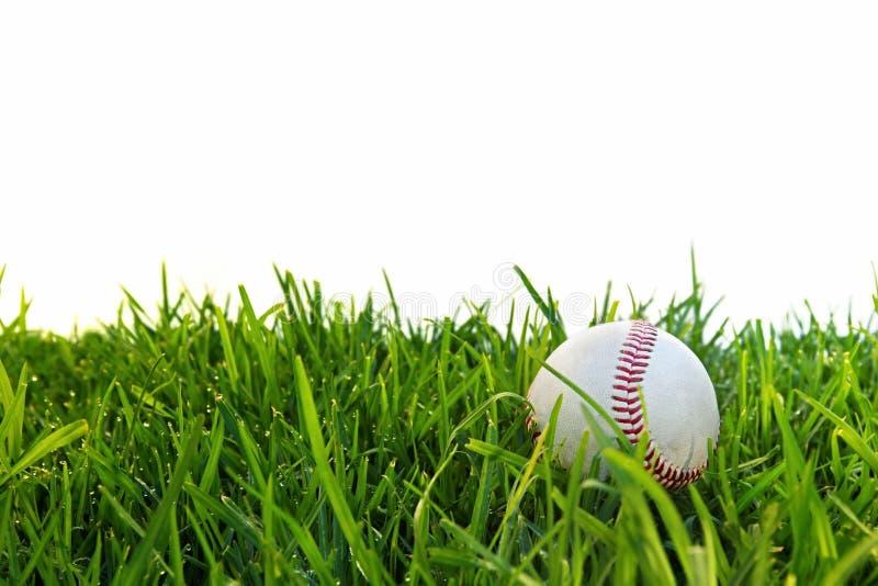 трава бейсбола росная стоковое изображение rf