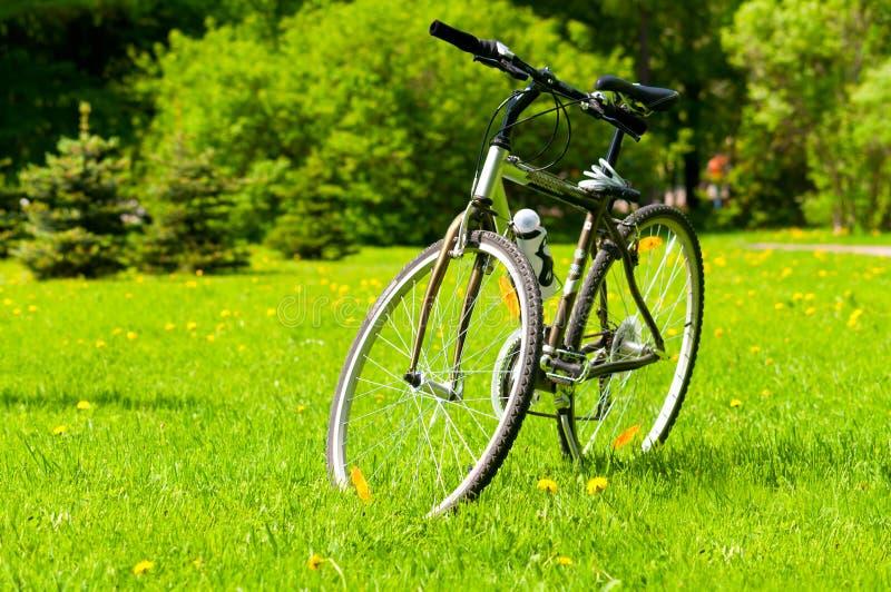 трава велосипеда стоковое изображение rf
