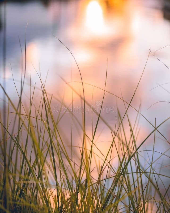 трава высокорослая стоковые изображения rf