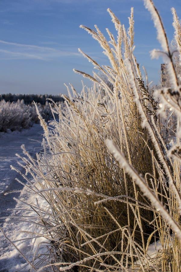 Трава в зиме стоковые изображения