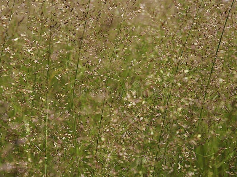 Трава в луге на солнечный летний день стоковые фото