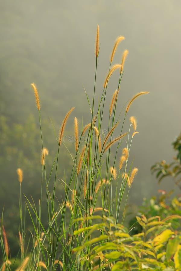 Трава в осени стоковые фото
