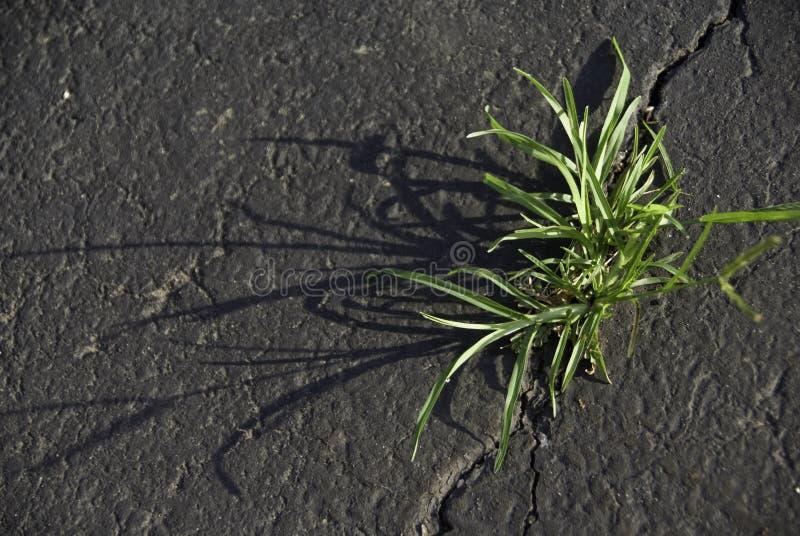 Трава в отказе стоковое изображение rf