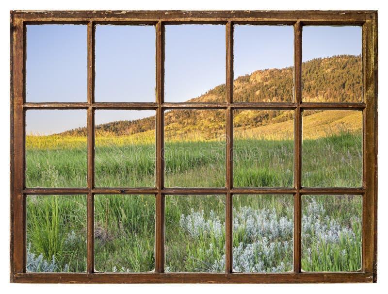 Трава в предгорьях Колорадо - вид на окно стоковая фотография