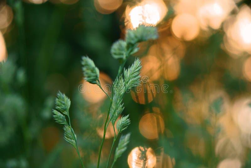 Трава в росе, папоротнике леса стоковая фотография