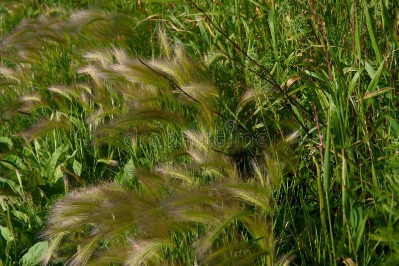 Трава в росе, папоротнике леса стоковые изображения
