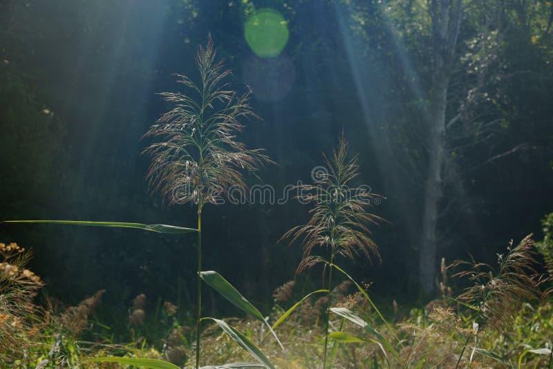 Трава в росе, папоротнике леса стоковое изображение