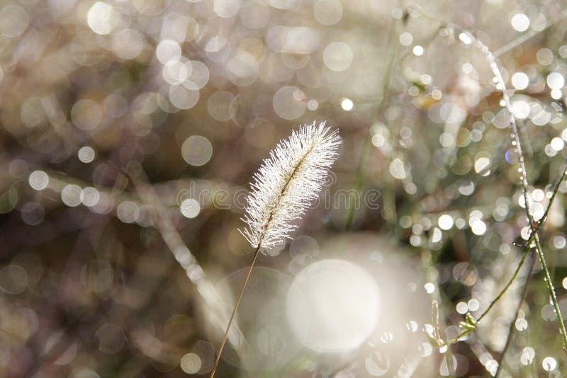 Трава в росе стоковые фото
