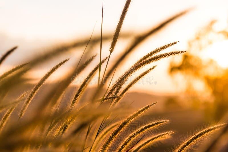 Трава в сезоне лета стоковые фото
