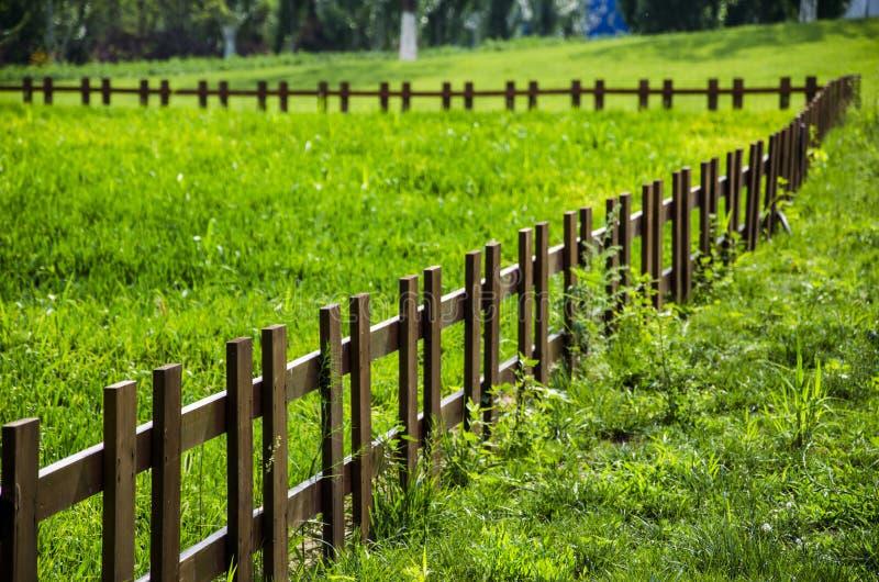 Трава в ферме стоковое фото