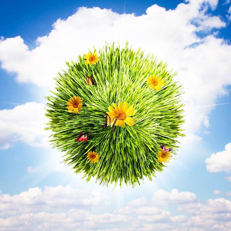 трава глобуса цветка стоковые изображения