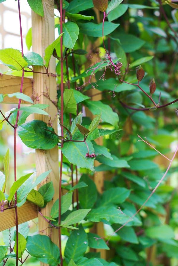 Трава гольца стоковое изображение rf