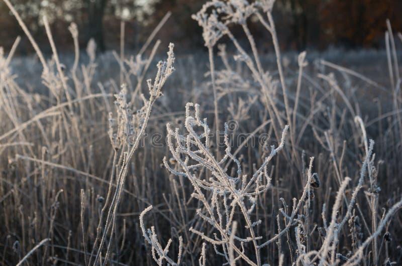 Трава заморозка восхода солнца стоковые фотографии rf