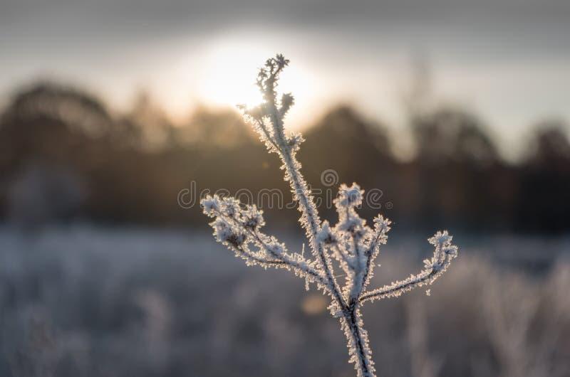 Трава заморозка восхода солнца стоковые изображения