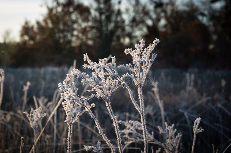 Трава заморозка восхода солнца стоковая фотография rf