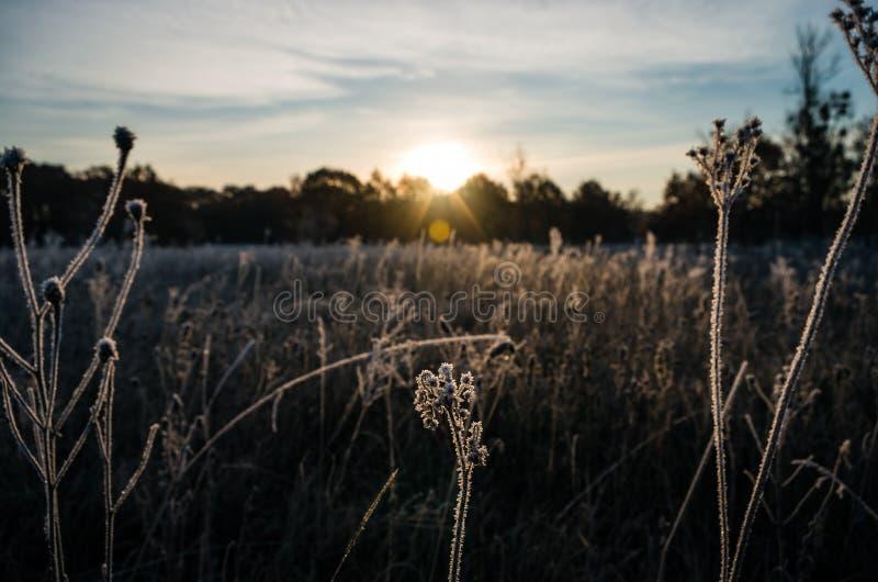 Трава заморозка восхода солнца стоковое фото rf