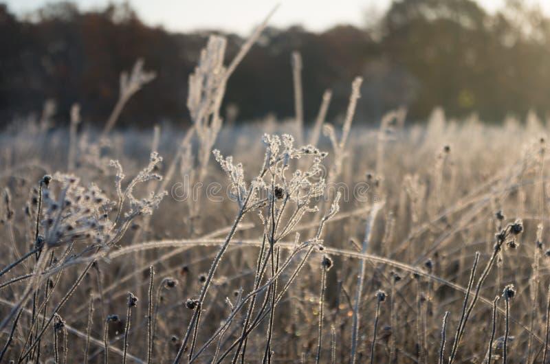 Трава заморозка восхода солнца стоковое изображение rf
