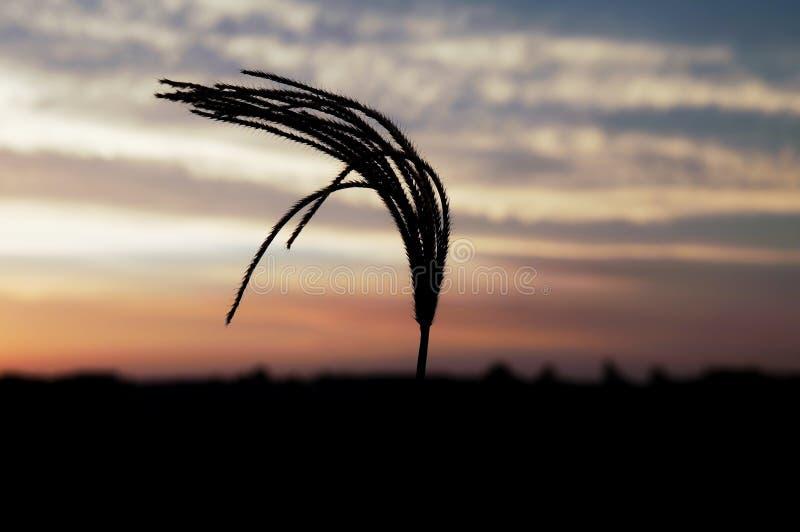 Трава 3 захода солнца стоковое фото rf