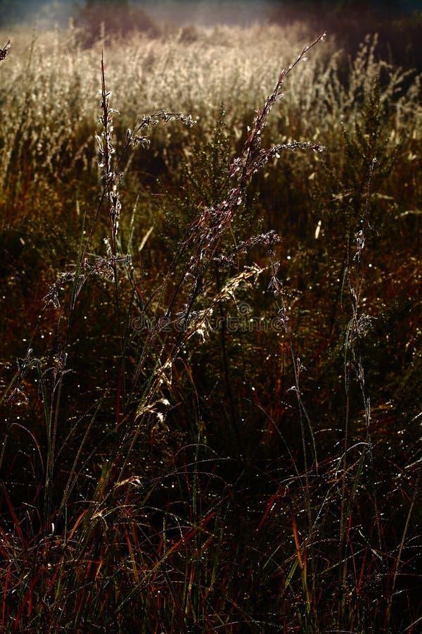 Трава зимы на восходе солнца стоковые изображения