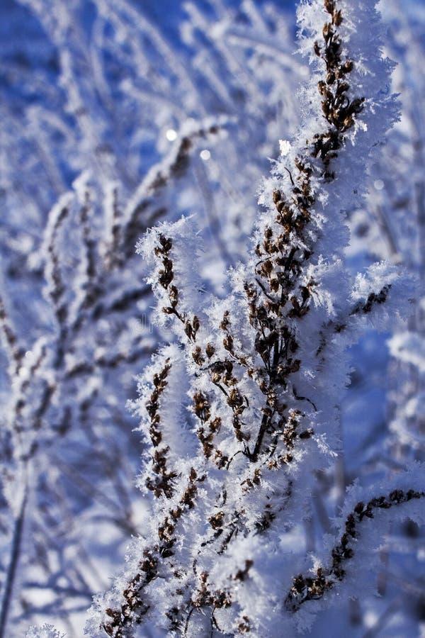 Трава зимы стоковая фотография