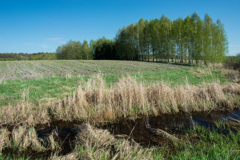 Трава и вода перед зеленым полем, рощей и голубым небом стоковая фотография rf