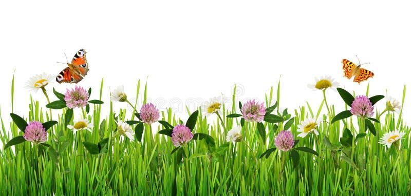Трава и граница полевых цветков с бабочками стоковые изображения rf