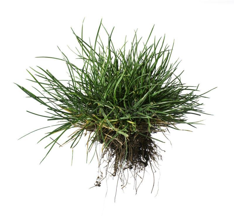 Трава и земля дерновины стоковые изображения rf
