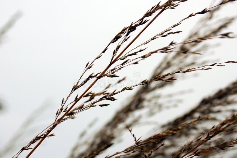 Трава и небо Макрос стоковые фотографии rf